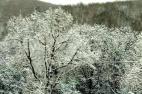 黑河降下今冬首场雪