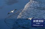 日本北海道近海发生6.2级地震