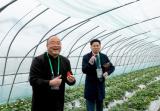 草莓正当红:国产草莓能成为下一个车厘子吗?