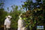 夏季马蜂集聚多 切勿擅捅马蜂窝