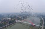 中国城乡融合发展进新阶段:城市进得了 乡村回得去