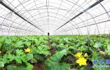 """加強建設!今年河北省打造10個系列農産品""""河北品牌"""""""